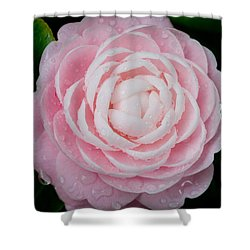 Pefectly Pink Shower Curtain by Rich Franco