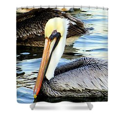 Pelican Pete Shower Curtain by Karen Wiles
