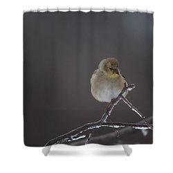 Pensive Shower Curtain by Susan Capuano