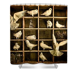 Pigeon Holed Shower Curtain by Chris Lord