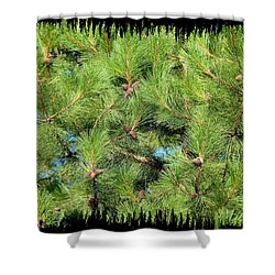 Pine Cones And Needles Shower Curtain by Will Borden