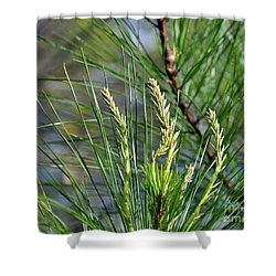 Pine Needles Shower Curtain by Al Powell Photography USA