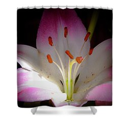 Pink And White Lily Shower Curtain by David Patterson