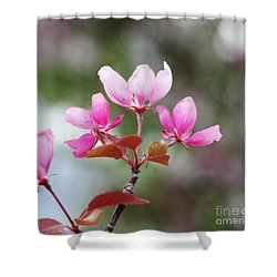 Pink Apple Blossom 2 Shower Curtain by Donna Munro
