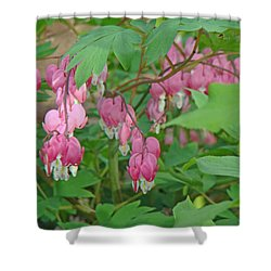 Pink Bleeding Heart Flowers - Dicentra Spectabilis Shower Curtain by Mother Nature