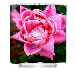 Pink Double Knockout Rose Shower Curtain by David G Paul