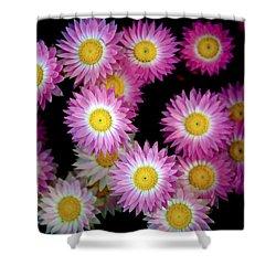 Pink Flowers At Dawn 3 Shower Curtain by Sumit Mehndiratta