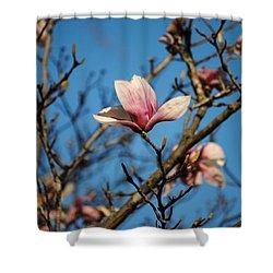 Pink Magnolia Flower Shower Curtain by Jai Johnson