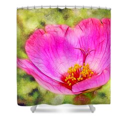 Pink Portulaca Shower Curtain by Judi Bagwell