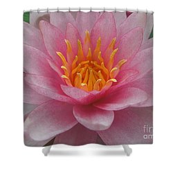 Pink Water Lily Shower Curtain by Renee Trenholm