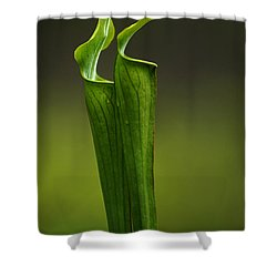 Pitcher Plants 2 Shower Curtain by Bob Christopher