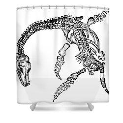 Plesiosaurus Shower Curtain by Science Source