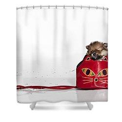 Pomeranian 2 Shower Curtain by Everet Regal