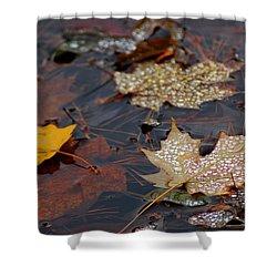 Pond Leaf Dew Drops Shower Curtain by LeeAnn McLaneGoetz McLaneGoetzStudioLLCcom