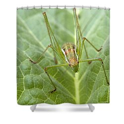 Portrait Of A  Cricket  Shower Curtain by Cliff  Norton