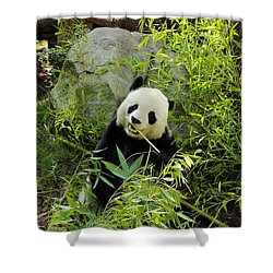 Posing Panda Shower Curtain by John  Greaves