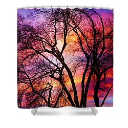 Powerful Trees Shower Curtain by James BO  Insogna