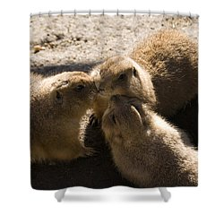 Prairie Dog Gossip Session Shower Curtain by Trish Tritz