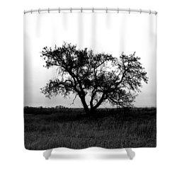 Prairie Dog Shower Curtain by Jerry Cordeiro