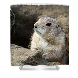 Prairie Dog Lookout Shower Curtain by Karol Livote