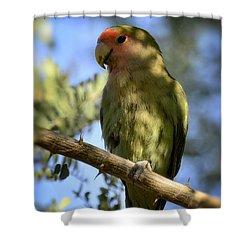 Pretty Bird Shower Curtain by Saija  Lehtonen