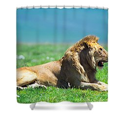 Pride Shower Curtain by Sebastian Musial
