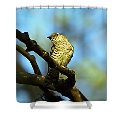 Prison Attire V2 Shower Curtain by Douglas Barnard