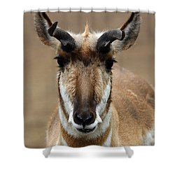 Pronghorn Shower Curtain by Karol Livote