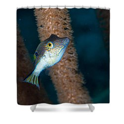 Puffer Profile Shower Curtain by Jean Noren