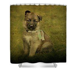 Puppy Sitting Shower Curtain by Sandy Keeton