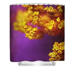 Purple And Gold 2 Shower Curtain by Judi Bagwell