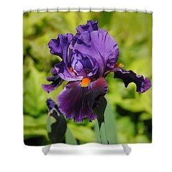 Purple And Orange Iris Flower Shower Curtain by Jai Johnson