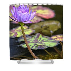 Purple Water Lilly Shower Curtain by Lauri Novak