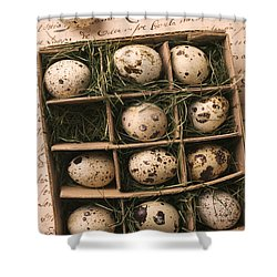 Quail Eggs In Box Shower Curtain by Garry Gay