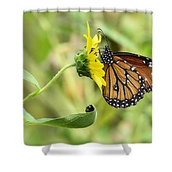 Queen For A Day  Shower Curtain by Saija  Lehtonen