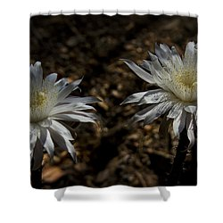 Queen Of The Night Blooms Shower Curtain by Saija  Lehtonen