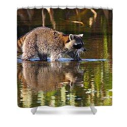 Raccoon Foraging  Shower Curtain by Bruce J Robinson