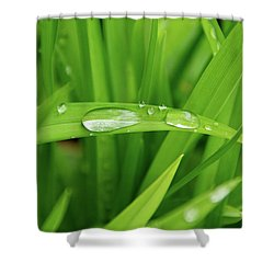 Rain Drops On Grass Shower Curtain by Trever Miller