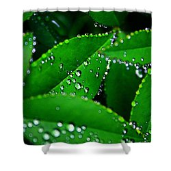 Rain Patterns Shower Curtain by Toni Hopper
