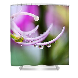 Raindrops On Amherstia Nobilis Shower Curtain by Marilyn Hunt