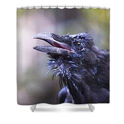 Raven Hyder, Alaska, Usa Shower Curtain by Richard Wear