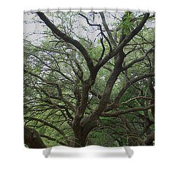 Reaching Out Shower Curtain by Aimee L Maher Photography and Art Visit ALMGallerydotcom