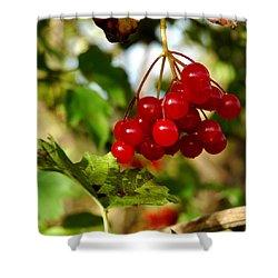 Red Bunch Shower Curtain by LeeAnn McLaneGoetz McLaneGoetzStudioLLCcom