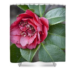 Red Camellia Squared Shower Curtain by Teresa Mucha