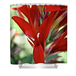 Red Canna Shower Curtain by Susan Herber