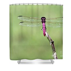 Red Dragonfly Dancer Shower Curtain by Sabrina L Ryan