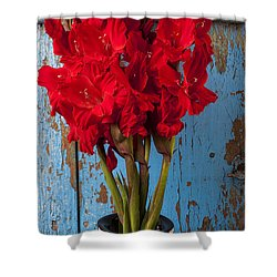 Red Glads Against Blue Wall Shower Curtain by Garry Gay