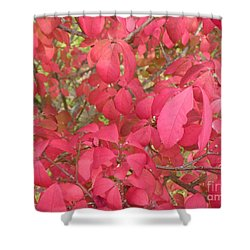 Red Leaves IIi Shower Curtain by Alys Caviness-Gober