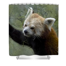 Red Panda Shower Curtain by Heiko Koehrer-Wagner