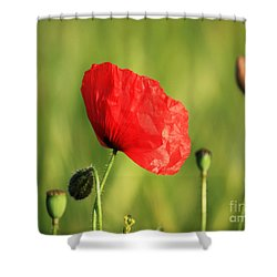 Red Poppy In Field Shower Curtain by Pixel Chimp